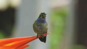 Charming hummingbird in the rain