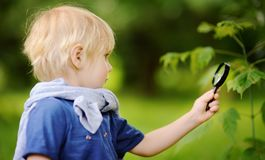 Charming kid exploring nature with magnifying glass. Little boy looking at tree with magnifier. Summer activity for inquisitive child royalty free stock image