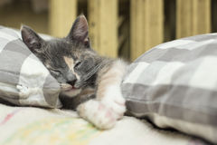 Charming the kitten is sleeping between soft pillows close to wa Royalty Free Stock Images