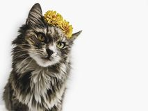 Charming kitten with yellow flowers. Copy space stock photography
