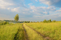 The charming landscape with tree and road middle of the field Royalty Free Stock Photography