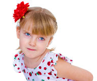 Charming little girl with red rose in hair braided. Half-length portrait. isolated on white background Royalty Free Stock Photos