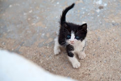 Charming Little Kitten Stock Images