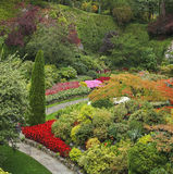 Charming multi-colour flower bed Stock Images