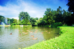 Charming park with pond Stock Photography