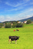 Charming pastoral scene in Southern France Royalty Free Stock Photo