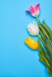 Charming posy of spring tulips over blue flatlay. Charming posy of spring tulips Royalty Free Stock Photo
