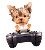 Charming Puppy play on game pad Stock Photo