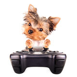 Charming Puppy play on game pad Stock Images