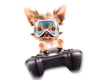 Charming Puppy play on game pad Stock Photos