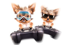 Charming Puppy play on game pad Stock Photography