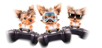 Charming Puppy play on game pad Royalty Free Stock Photo