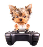 Charming Puppy play on game pad Royalty Free Stock Photos