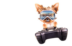Charming Puppy play on game pad Royalty Free Stock Images