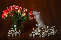 Charming rat on its hind legs sniffs flowers. Brown background. Festive picture. Flowers for loved ones royalty free stock photo