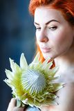 Charming romantic female woman holds white protea on blue background. Flower shop and floristic design master class concept on painted blue wall loft style stock photos