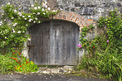 Charming rose covered wall and stable doors. Charming rose covered grey stone and brick wall and stable doors in Northern Irish village Stock Photography