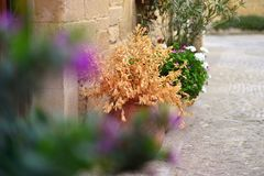 Close-up of blurred violet flower and at the background a typical spanish village street. Stock Images