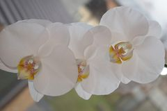 Flora Stock Image
