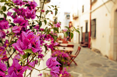 Charming street in Cadaques, Costa Brava, Spain. View of a charming street of Cadaques, Costa Brava, Spain, with the typical white washed houses and purple royalty free stock photo