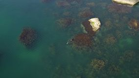 Charming summer seascape. Diver catches fish in seaweed. Sea underwater fishing. Magnificent summer aerial seascape. Charming blue sea with coastal rocks stock video