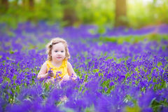 Charming toddler girl in bluebell flowers in spring forest Stock Photography