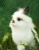 Charming white rabbit Royalty Free Stock Images