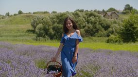 Charming woman with basket walking in floral glade. Charming smiling woman in stylish blue dress with picnic basket walking through fragrant lavender blossoms in stock footage