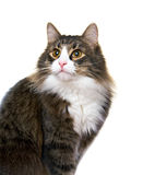 Charming young  cat Stock Photography