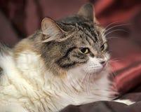 Charming young cat Stock Photos