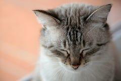 Charmy katzenartig, einen Rest habend Stockfotografie
