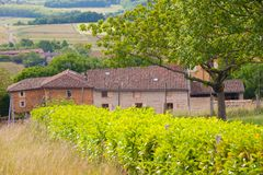 Charnay,rhone,france Stock Photos