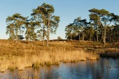Charneca com lago Fotos de Stock Royalty Free