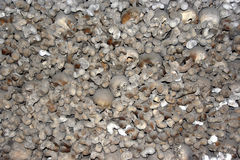 Charnel house - skulls and bones Stock Images