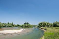Charolais cows in river landscape Stock Photo