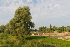 Charolais cows in river landscape Royalty Free Stock Photos