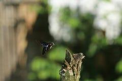 Charpentier Bee image libre de droits