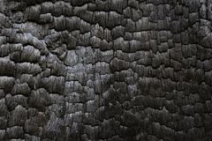 Free Charred Black Wood Log Interior Burned In A Forest Fire Royalty Free Stock Photography - 103537607