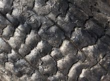Charred log. Close-up of charred tree after a forest fire Royalty Free Stock Photography