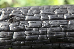 Charred log after a forest fire Stock Photos