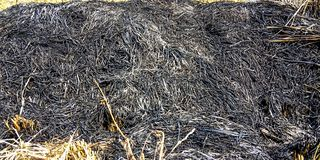 Charred straw royalty free stock photography