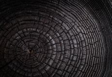 The charred stump of tree felled - section of the trunk with annual rings. Slice burnt black wood royalty free stock photography