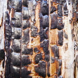 Charred surface of wood after fire Stock Images