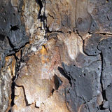 Charred Tree Bark. Royalty Free Stock Image