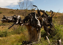 Charred Tree by Fire Stock Photo