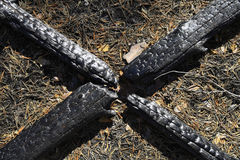 Charred tree trunks Royalty Free Stock Image