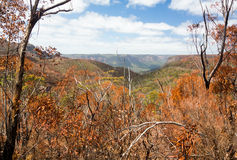 Charred trees in Blue Mountains Australia Stock Photo