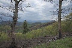 Charred trees mark the edge of a destructive fire. Stock Photo