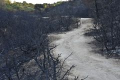 Dirt path through burned land Algarve Portugal royalty free stock photo