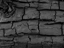 Charred Wood 1. Charred log background texture Royalty Free Stock Image